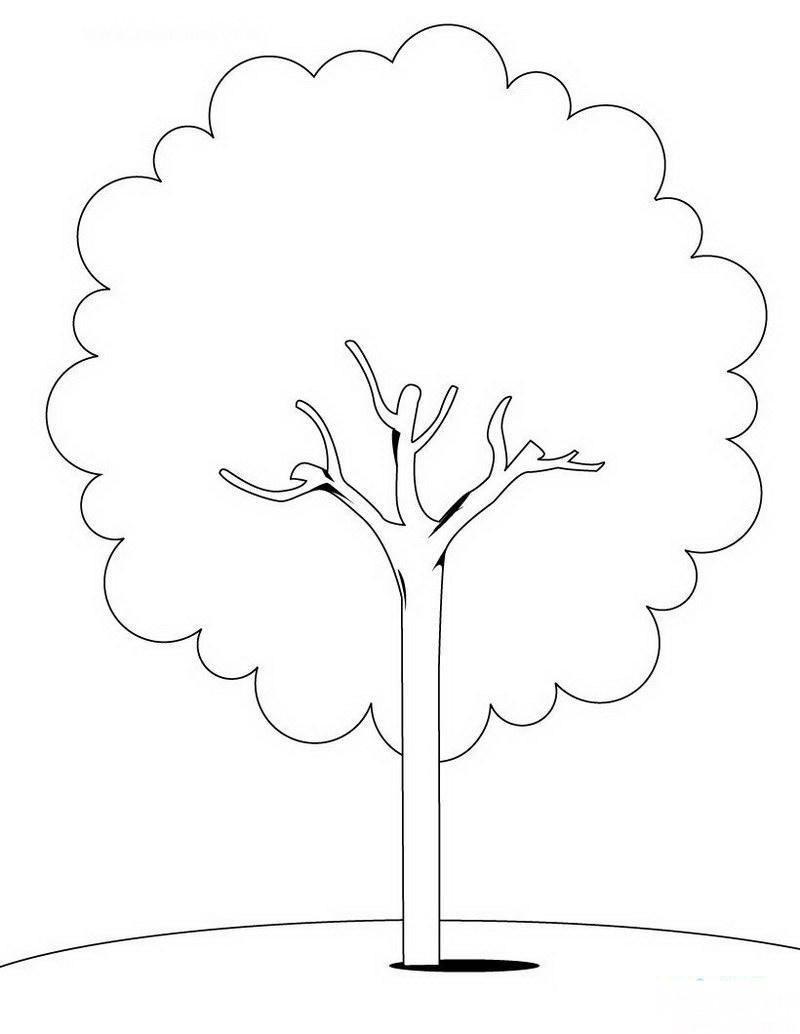 树-简笔画篇