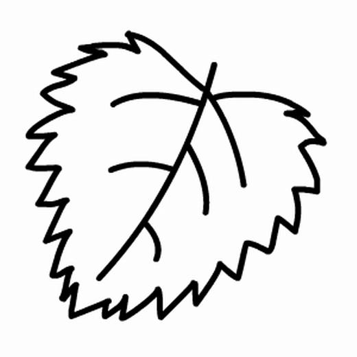 植物简笔画-树叶