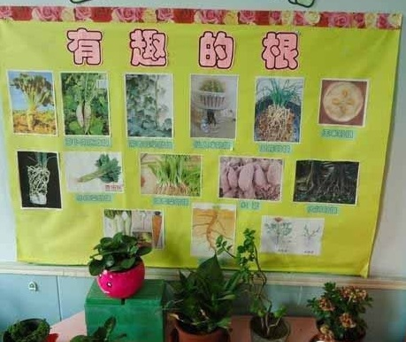 幼儿园中班活动区域布置