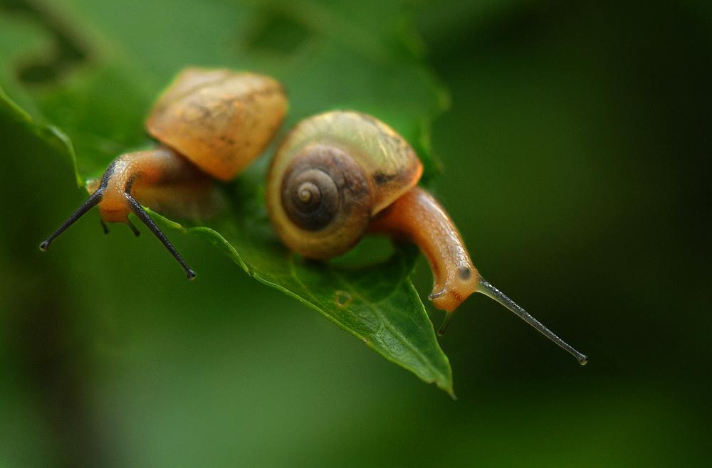 活动目标: 一,熟悉蜗牛身体的基本结构,感知螺旋形的基本画法.
