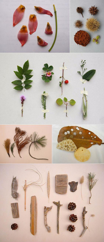 秋季树叶标本制作方法及魅力展示方式大全图片