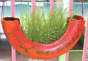 自然角 | 布置新花盆、新名字、新植物,让自然角焕然一新吧~