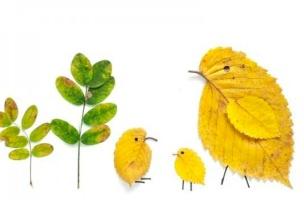 20种绝美落叶创意,装饰你的教室吧(下)