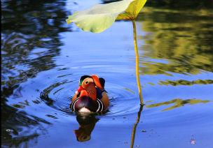 大班手指画活动:夏天的池塘
