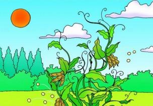 中班环保活动 :植物的妈妈