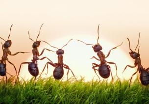 小班案例反思:生成主题活动《蚂蚁》
