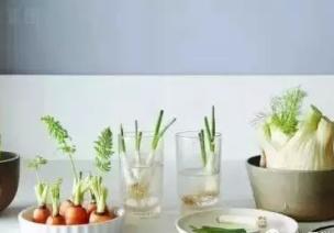 蔬菜根打造自然角的阳光小农场