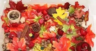 带孩子玩转秋天,感受秋天!