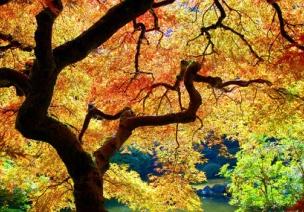 主题活动—我爱秋天 活动二