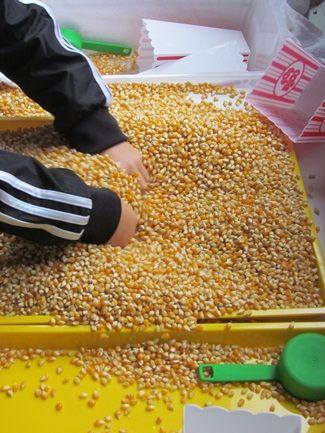环创|秋季应景感官盒——谷物农场大丰收!