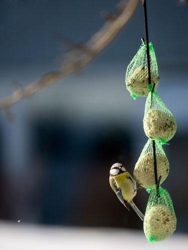 蝴蝶,小鸟,让我请你们吃饭好吗?