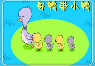 中班音樂活動《母鴨帶小鴨》