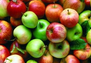 小班数学教案:摘苹果-按大小分类