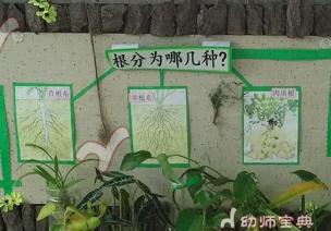 【旧物利用】最有知识含量的自然角设计