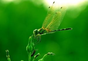 大班数学:小蜻蜓捉害虫