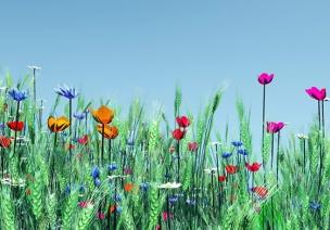 大班仿编诗歌《春天的颜色》