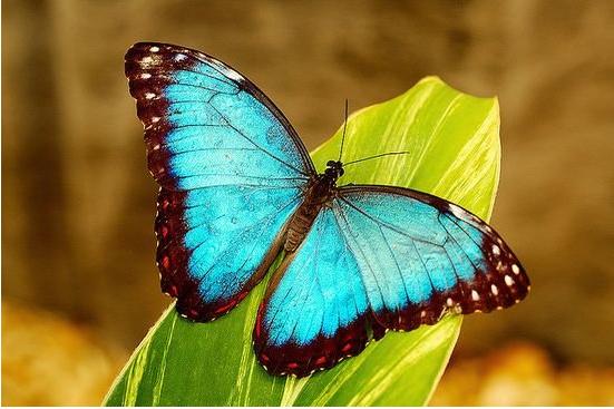 中班半日活动计划——美丽的蝴蝶