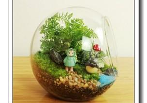 【原创】微景观绿植,DIY个永生版吧!