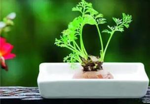 穹顶之下,你必须要做的事——不断重生的自然角盆栽