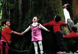11招讓孩子與大樹親密接觸