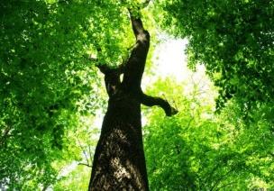 拜访大树主题墙及区角布置