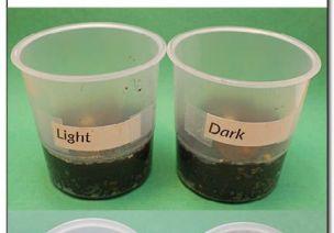 种子宝宝到底喜欢什么?7个种子实验满足孩子的探索欲望