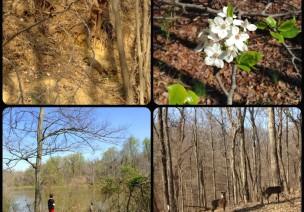 自然课堂—与大树的亲密接触