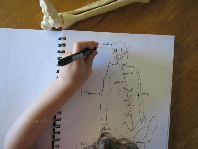 瑞吉欧探究式学习-研究人体