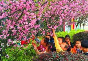 春季主题活动《大树》——树的种类