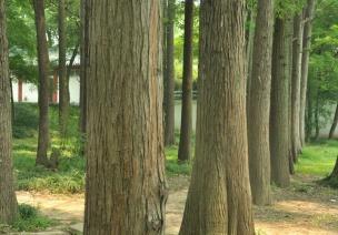 春季主题活动《大树》——树的变化