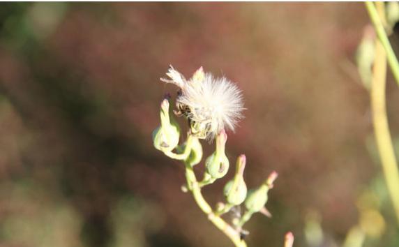 苍耳传播种子的图片_大班科学主题教育:奇妙的种子-幼师宝典官网