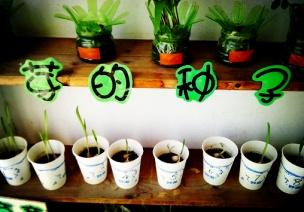 区域探究活动:种子的秘密