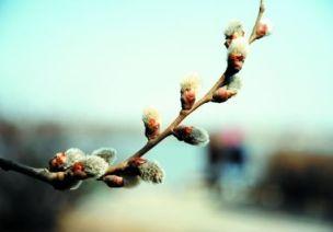 连续性探究活动 | 小芽苞里的秘密