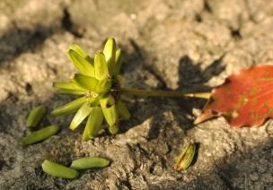 春季大班主题活动《奇妙的种子》