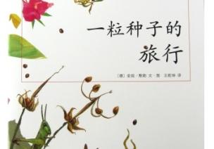 【主题绘本推荐】小小种子的旅行