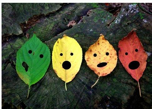 教育随笔   一片叶子的秘密——绘本中的生命故事
