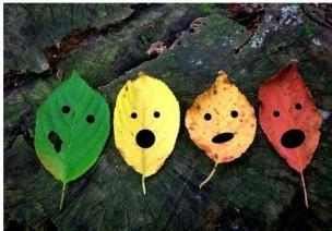 教育隨筆 | 一片葉子的秘密----繪本中的生命故事