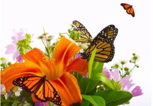 专家评课 | 大班音乐欣赏活动:花儿与蝴蝶