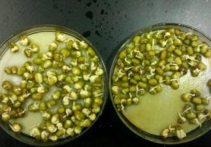 中班觀察記錄 | 不發芽的豆豆