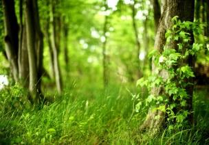 森林 | 大自然是最好的课堂,孩子,尽享林间嬉闹吧