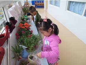小班观察记录 | 观察种子的孩子们