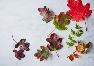 从菜鸟到高手!秋季树叶标本制作方法及魅力展示方式大全