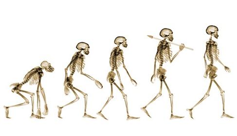 示范课视频 | 大班科学课《神奇的骨骼》