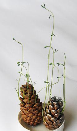自然角 | 秋天自然角种点啥?玉米、红薯和松球…丰收果实齐上阵!