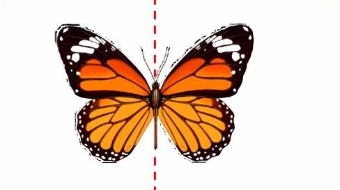 创造性课程 | 大班数学教案及反思——认识对称