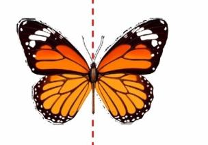 創造性課程 | 大班數學教案及反思——認識對稱