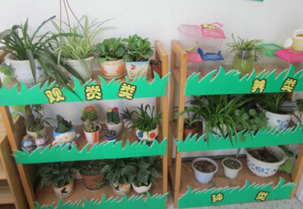 自然角指导 | 一帖告诉你春夏秋冬、大中小班如何创设自然角