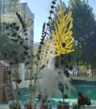 环创+活动 | 全套丰富的自然教育创意,让您的园所不输顶级名园!