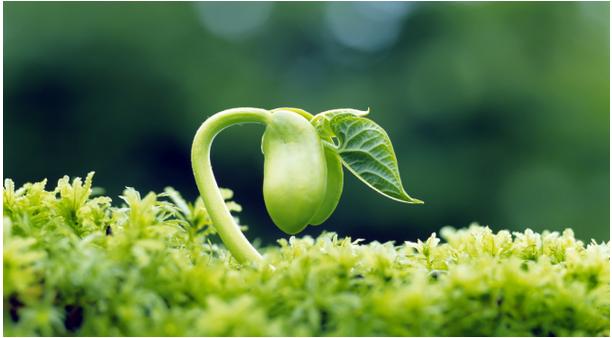 自然角观察记录 | 小苗到底需要多少水?