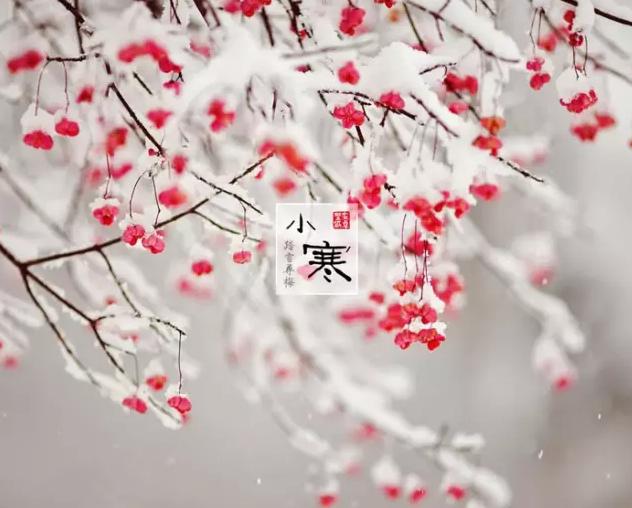 二十四节气 | 小寒(第23节)